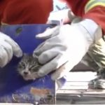 Cat Stuck in Tube Is Freed By Firefighters