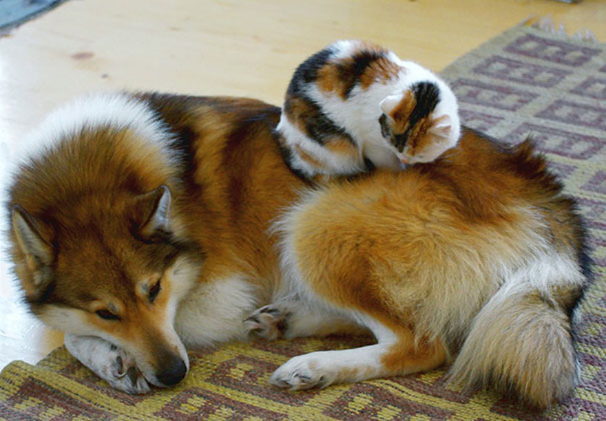 Best Dogs To Get Along With Cats