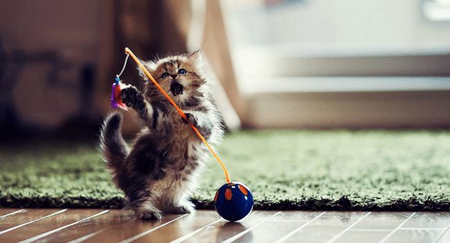 comfort zone cat diffuser