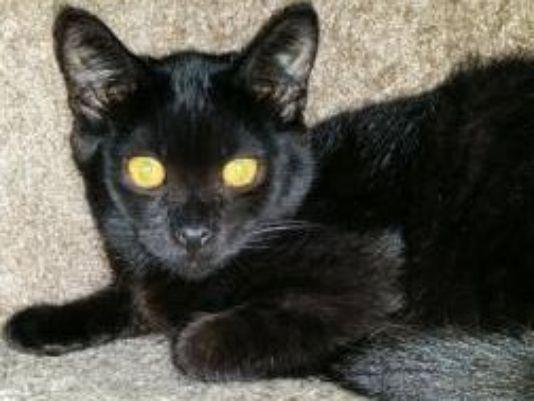 Kitten Stolen From Shelter Needs Medication