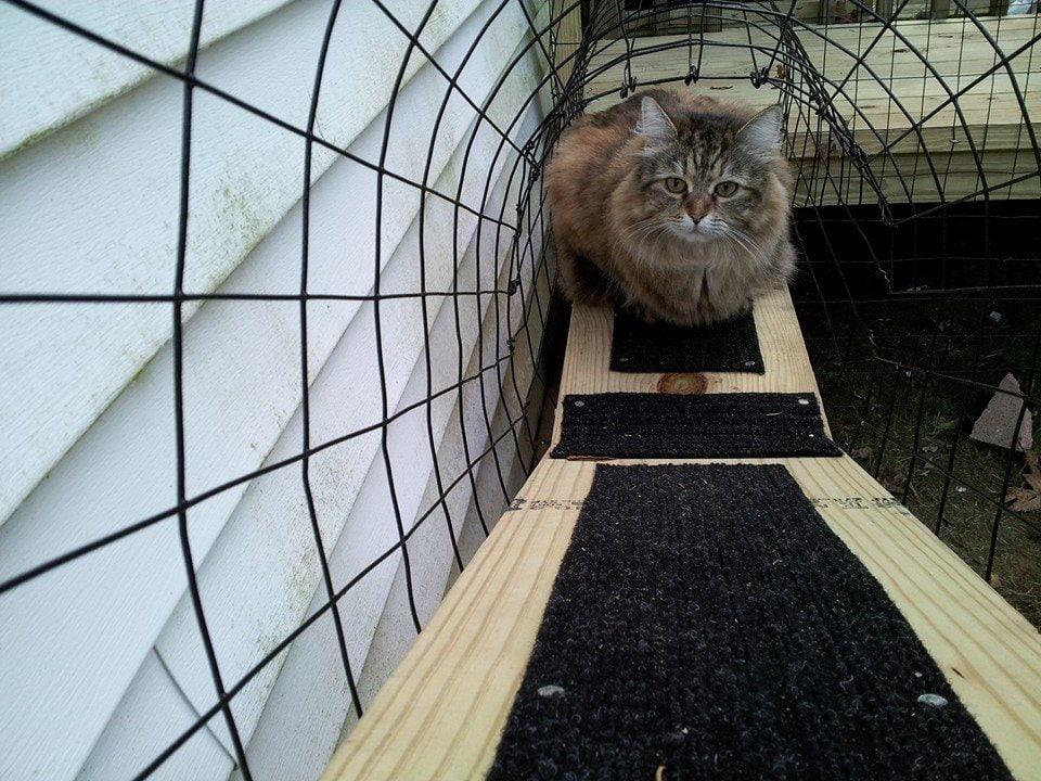 kitty kastle 3