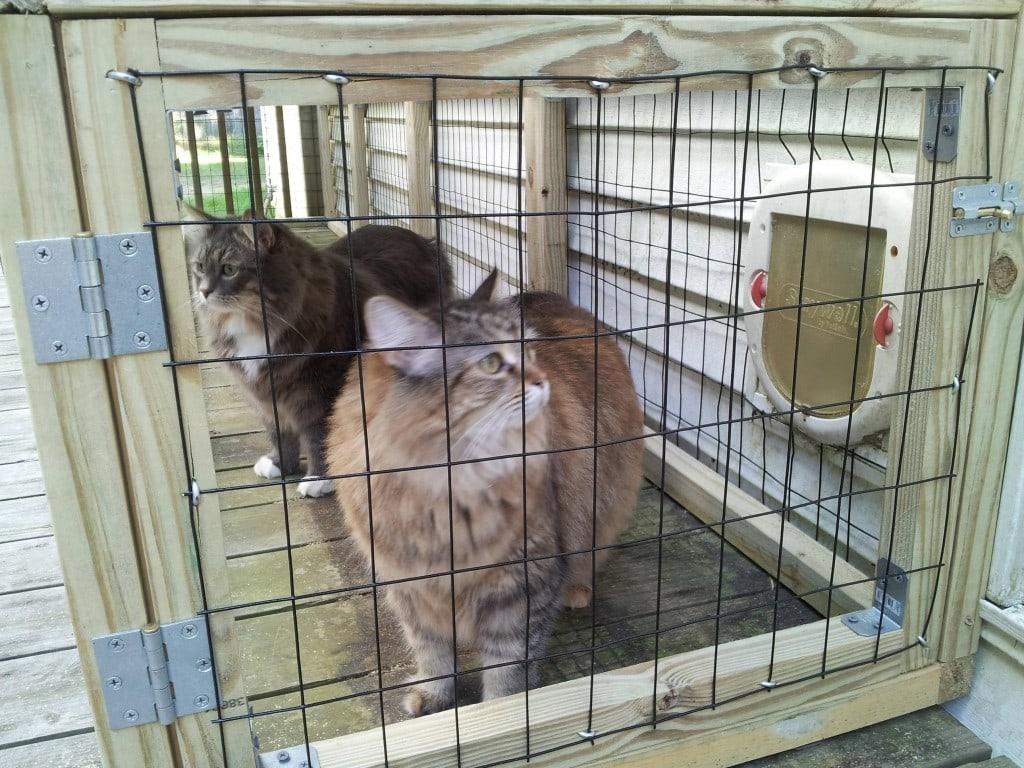 kitty kastle 4