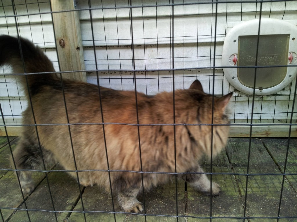 kitty kastle 5