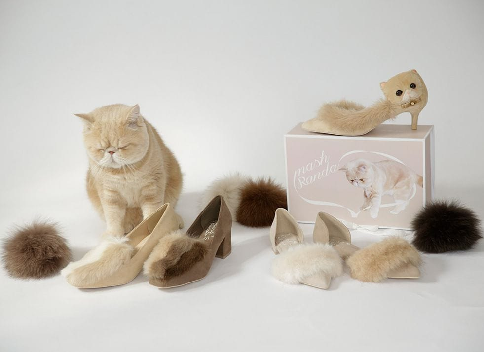 Instagram Celebrity Cat Gets His Own Line of Shoes