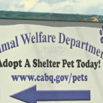 Woman Sues Shelter After Adopted Cat Bites Her