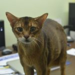 Ivy Insurance's New Shop Cat Is Already a Hit