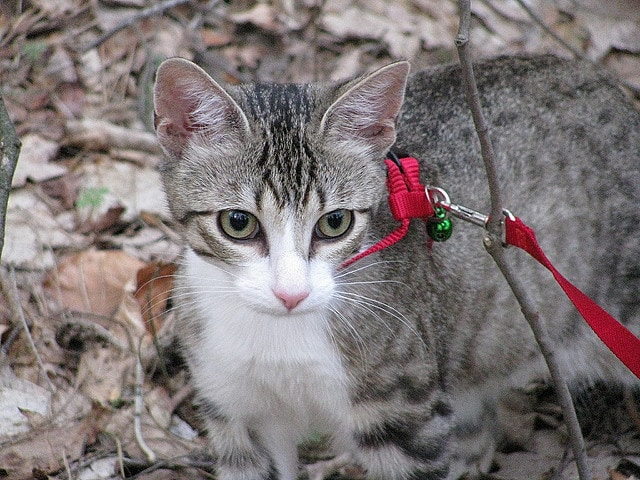 A Leash Law for Cats? One Alaska Town Considers It.