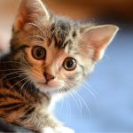 Bequest Allows New Zealand SPCA to Offer Bargain Price Cat Spaying and Neutering