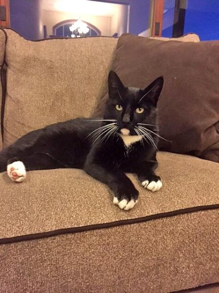 Hasil gambar untuk mittens cat lost flitton family