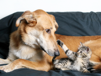Cat And Dog The Movie Part