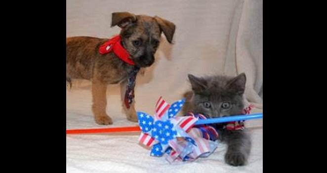 It's Not Up for Debate: PAWlitics Important to Both DemiCATs & RePUPlicans