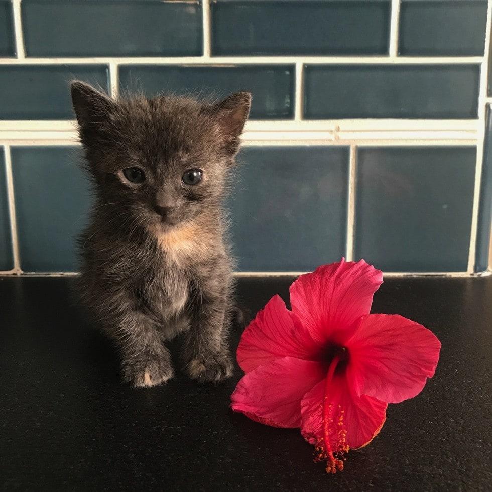 Four Senior Chihuahuas Adopt a Kitten