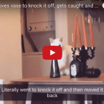 Cat Gets Caught Moving Vase, Moves It Back!