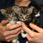 Three Kittens Left In Chip Box