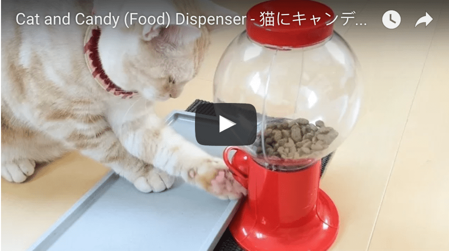 Cat Feeds Himself From Candy Dispenser