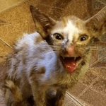 How Smeagol the Starving Street Cat Became Her Precious