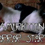 Don't Be a Scaredy Cat Watching Amerikitten Horror Story