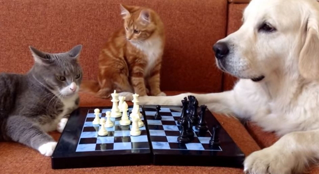 Whether Cat or Dog, Playing is Good for Everyone