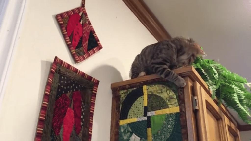 This Kitten Is Quite the Interior Decorator