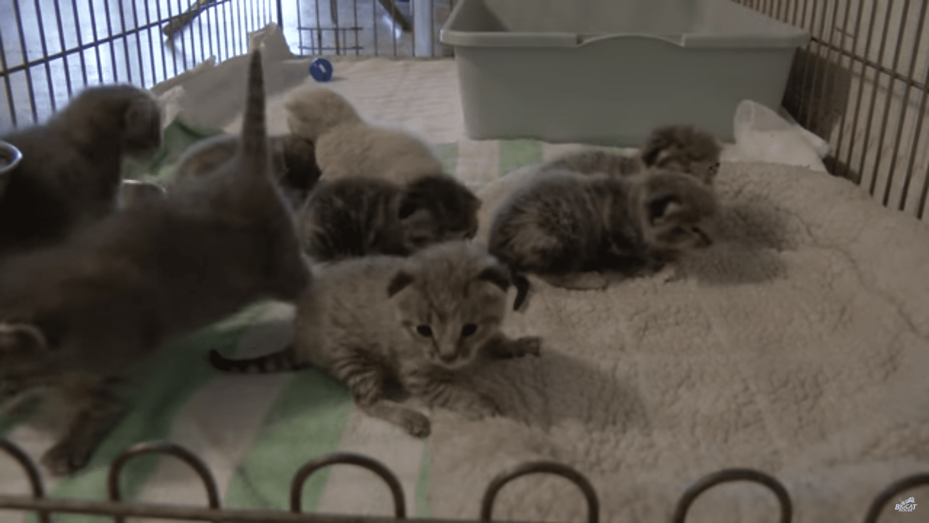 Two Whole Minutes of Cute Baby Kittens