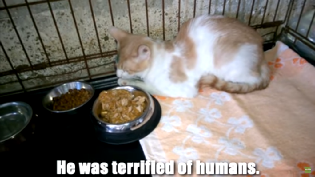 Watch This Rescue Cat's Amazing Transformation