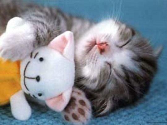 Sleepy Time for Kitties