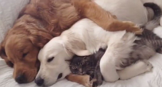 Sometimes You Just Need to Spoon With Friends