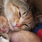 The Power of Love: Momma & Baby Seeking Forever Home