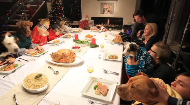 Holiday Feast: Behind the Scenes with the Animal Stars