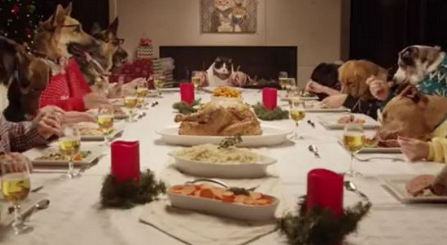Wait Until You See These 13 Dogs and 1 Cat Enjoy Their Holiday Feast