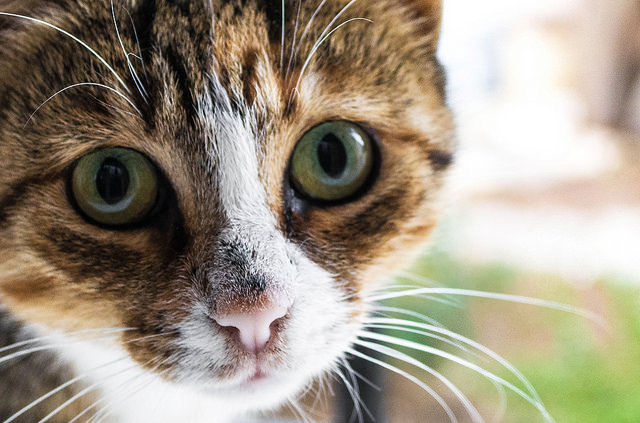 Cat Causes Power Outage in New Zealand