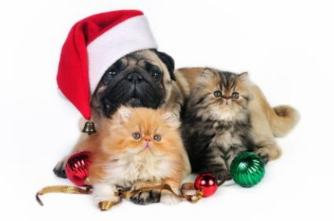 Dr. Hansen's Tips for a Pet Safe Holiday