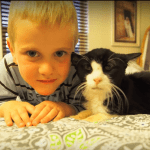 Family Bids Farewell to Cat Adopted at Age 20