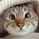 Sol the Cross-Eyed Cat is New Instagram Star