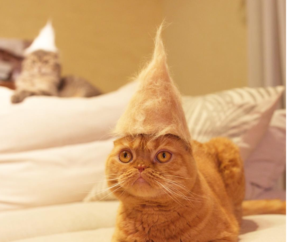 No Use For Fur Balls These Cats Wear Them As Hats Life
