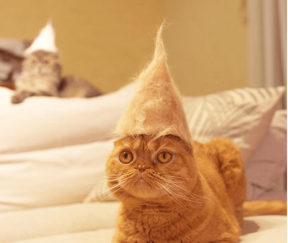 egyptian mau meow