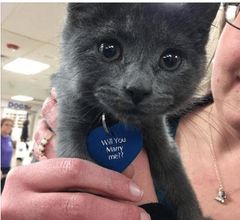 Kitten and SPCA Help Man Pop the Question
