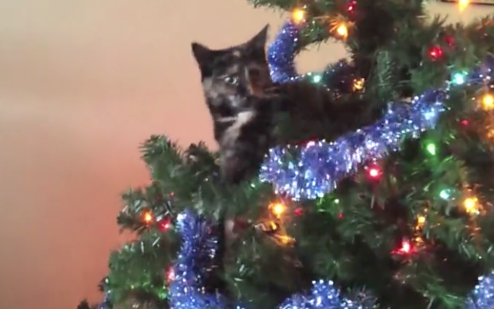 Cats get Crazy at Christmas Time