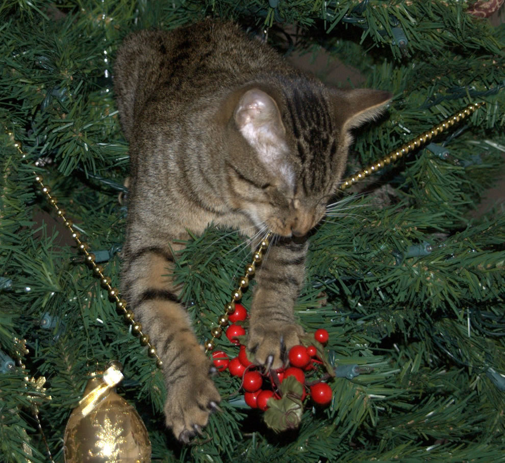 Do Cats Like The Smell Of Christmas Trees