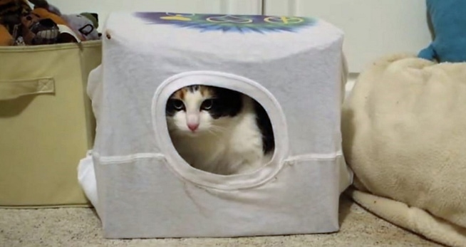 Cardboard Boxes from Shopping Stacking Up? Make a Cat House