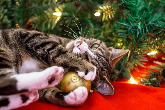 It's Holiday Time: Is Your Tree Kitty Ready?