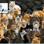 The Cats' Lodge: Future Italian Bed & Breakfast Has Mission to Save Strays