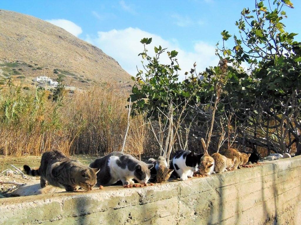dumpster-cats