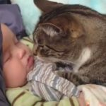 So Sweet: Nothing Quite Like Cats Who Love Babies