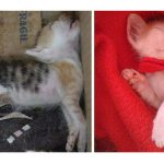 See How Love  and Care Transforms 20 Rescued Cats