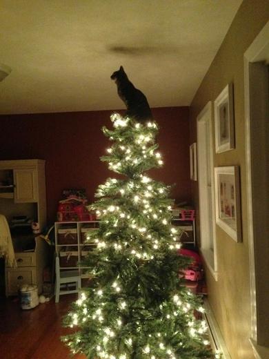tree-5