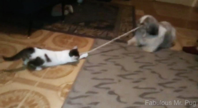 Nothing Like a Game of Tug-O-War Between Friends