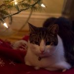 Keep Your Cat Safe This Holiday Season