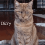 A Cat's Diary: Captured