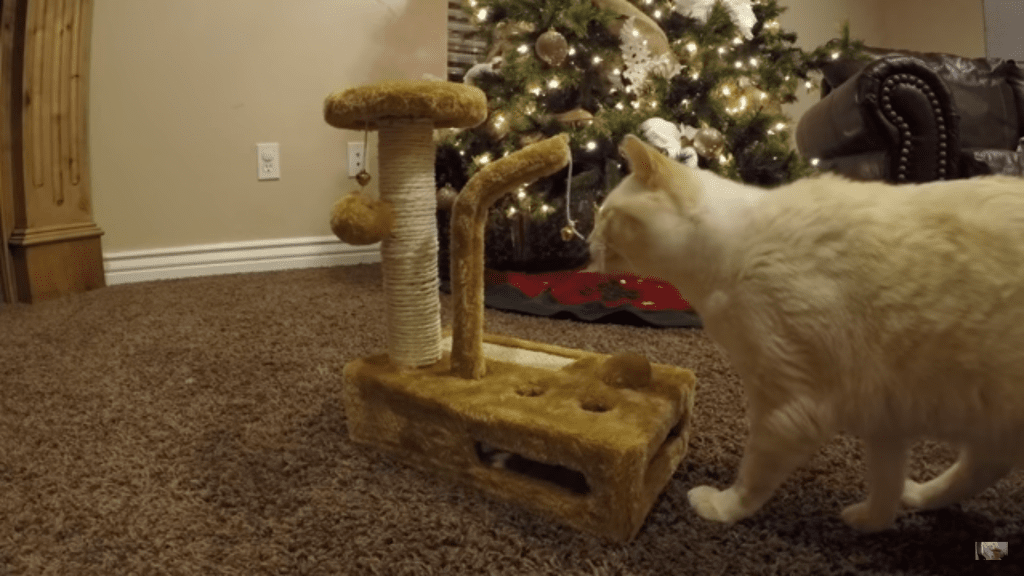 Cat Gets Early Christmas Present